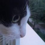 Profilbild von Sabrina K.